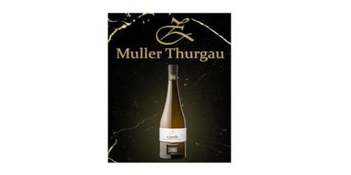 Muller Thurgau DOC GFRIL Peter Zemmer. Përqindja alkolike 12.5